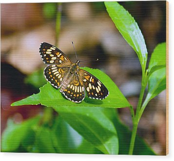 Wood Print featuring the photograph Butterfly by Susi Stroud