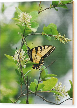 Wood Print featuring the photograph Butterfly Tiger Swallow by Peggy Franz