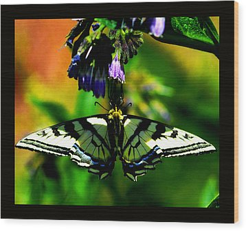 Wood Print featuring the photograph Butterfly Upside Down On Comfrey Flowers by Susanne Still