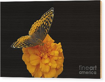 Butterfly Visitor Wood Print by Cindy Manero