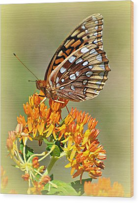 Butterfly Weed 1 Wood Print by Marty Koch