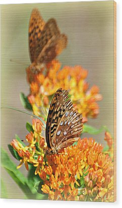 Butterfly Weed 2 Wood Print by Marty Koch