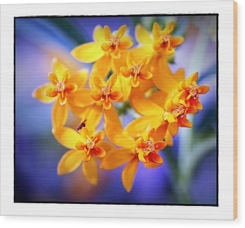 Butterfly Weed Wood Print by Judi Bagwell