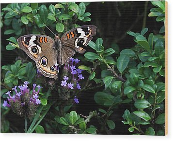 Butterfly With Torn Wings Wood Print by Robert Ullmann