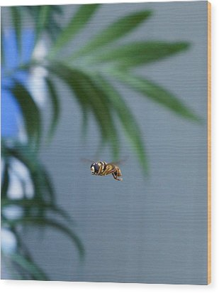 Buzz Of The Hover Fly Wood Print