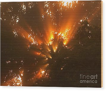 By The Dawns Early Light Wood Print by Marjorie Imbeau