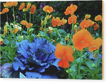 Cabbage And Viola's Wood Print by Laura  Grisham