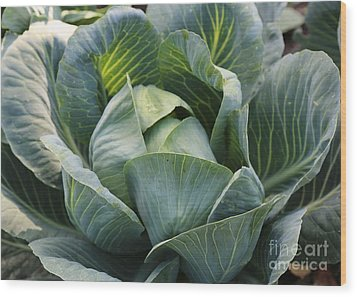 Cabbage In The Vegetable Garden Wood Print by Carol Groenen