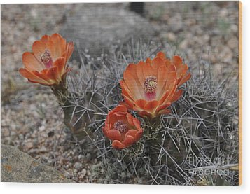 Wood Print featuring the photograph Cactus Beauty by Cheryl McClure