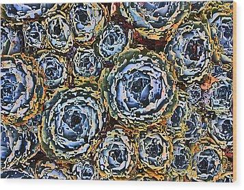 Cactus Blues Wood Print by Yvonne Scott