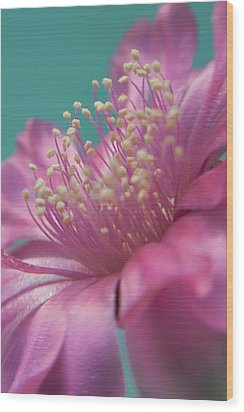 Cactus Flower Wood Print by Images by Patti-Jo