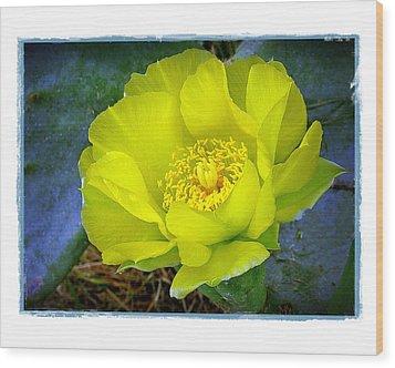Cactus Flower Wood Print by Judi Bagwell