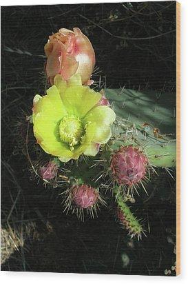 Cactus Flowers Wood Print by Bonnie Muir