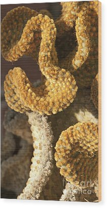Cactus In Orange Polka Dots Wood Print by Artist and Photographer Laura Wrede