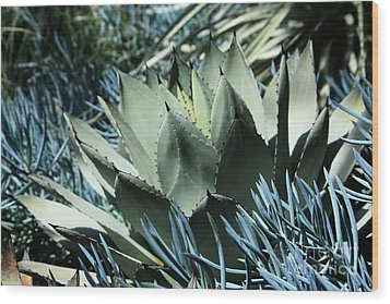 Cactus Wood Print by Marjorie Imbeau