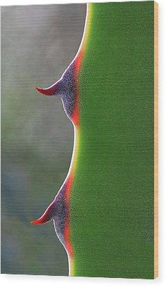Cactus Wood Print by Patricia Fenn Gallery