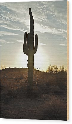 Cactus Sunset Wood Print by Kenny Jalet