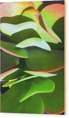 Cactus Wave Wood Print by Paul Washington