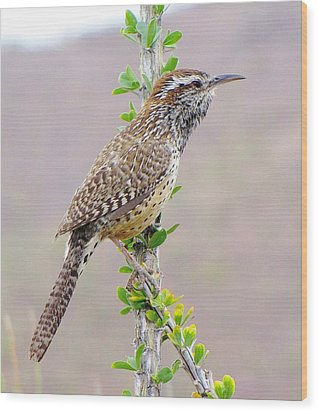 Cactus Wren Wood Print by FeVa  Fotos