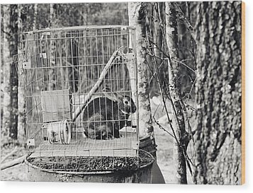 Caged Rabbit Wood Print by Floyd Smith