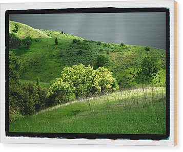 Calabasas Meadow After The Storm Wood Print by Noah Brooks