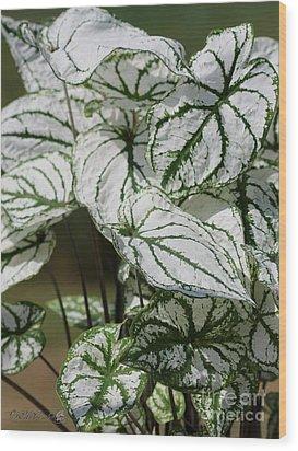 Caladium Named White Christmas Wood Print by J McCombie