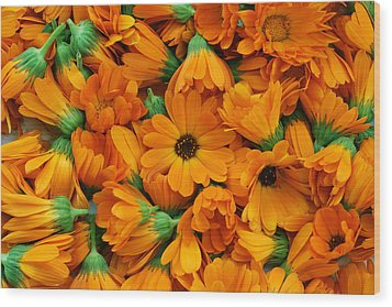 Wood Print featuring the photograph Calendula Flowers by Aleksandr Volkov