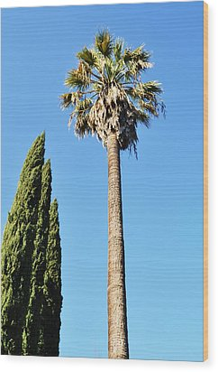 California Palm Wood Print by Todd Sherlock