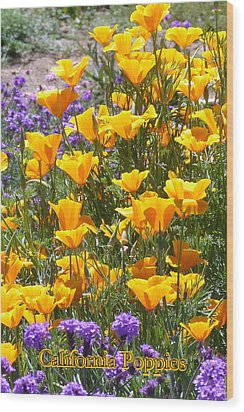 California Poppies Wood Print by Carla Parris