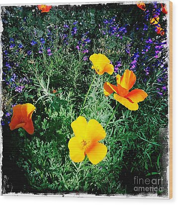 Wood Print featuring the photograph California Poppy by Nina Prommer
