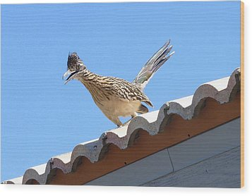 Wood Print featuring the photograph California Roadrunner by Carla Parris