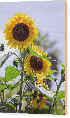 California Sun Wood Print