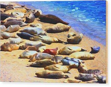 California Sunbathers . Harbor Seals Wood Print by Wingsdomain Art and Photography