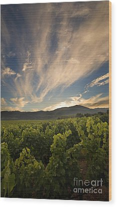 California Vineyard Sunset Wood Print by Matt Tilghman