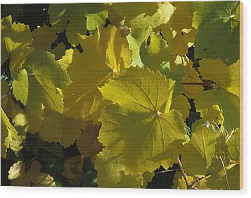California Wild Grape Leaves Vitis Wood Print by Marc Moritsch