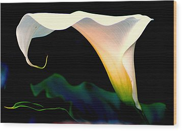 Calla Lily By  Wood Print