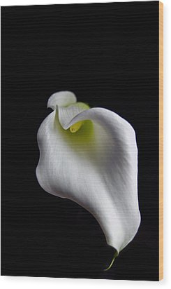 Calla Lily Wood Print by Elsa Marie Santoro
