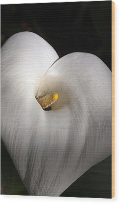Calla Lily Wood Print by Gilbert Artiaga