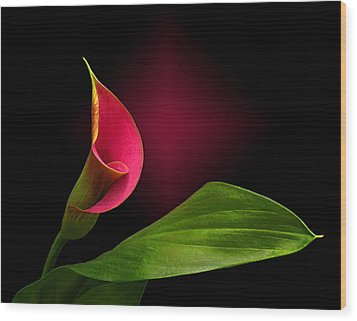 Wood Print featuring the photograph Calla Lily by Judy  Johnson