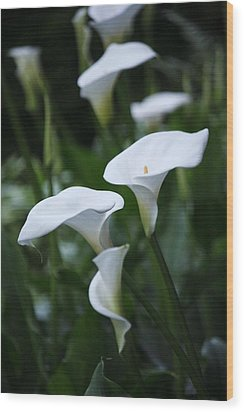 Calla Lily Sea Wood Print by Chris Anderson