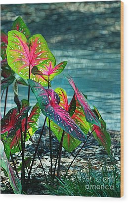 Calladiums Wood Print by Judi Bagwell