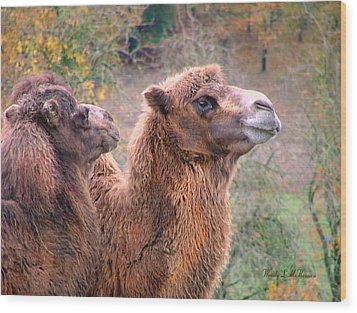 Calm Camels Wood Print by Wendy McKennon