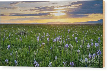 Camas Fields Wood Print by Idaho Scenic Images Linda Lantzy