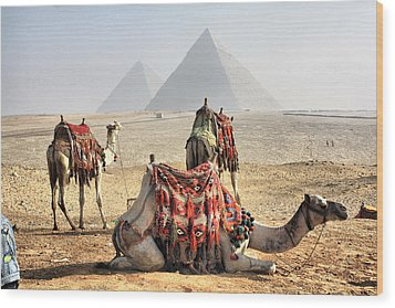Camel And Pyramids, Caro, Egypt. Wood Print by Oudi