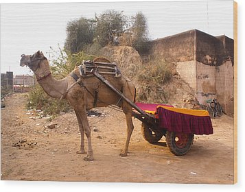 Camel Yoked To A Decorated Cart Meant For Carrying Passengers In India Wood Print by Ashish Agarwal