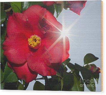 Camellia Flower Wood Print by Mats Silvan