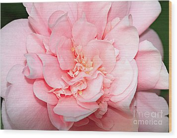 Camellia Wood Print by Louise Heusinkveld