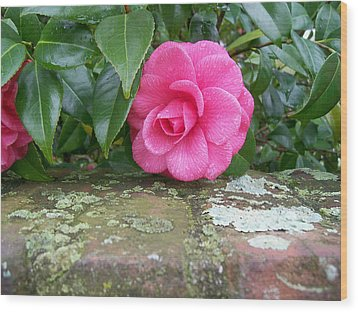 Camellia On Wall Wood Print by Larry Bishop