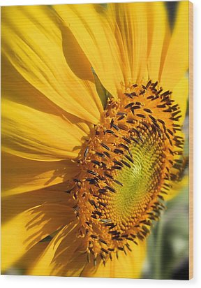 Wood Print featuring the photograph Can You Say Sunshine by Lynnette Johns