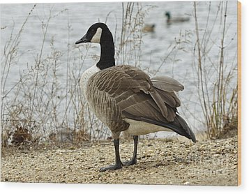 Canada Goose Wood Print by Denise Pohl